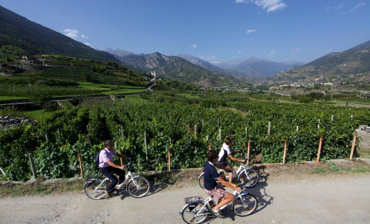 Pedaling among the vines in Aosta Valley